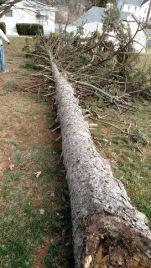 Length of tree