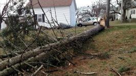 Tree toward our garage