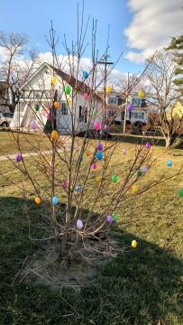 Egg Tree 1