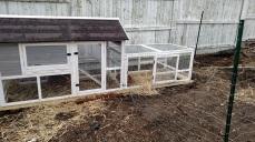 New chicken home